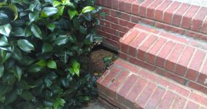 front-steps-brick-lg